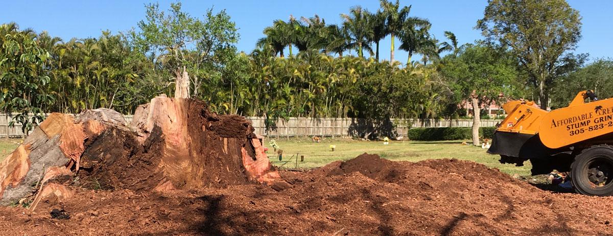 stump removal tree services miami