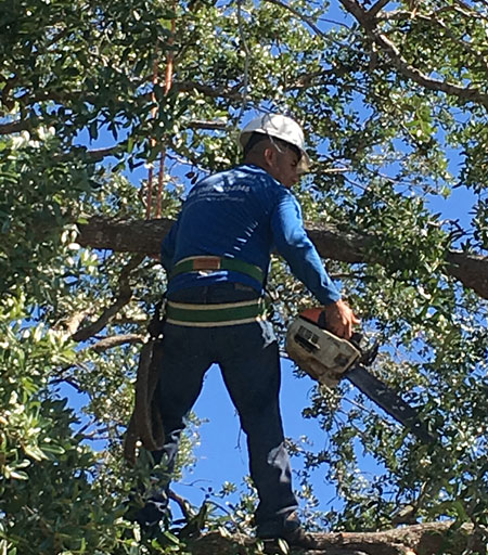 Best Reviews for Tree Trimming