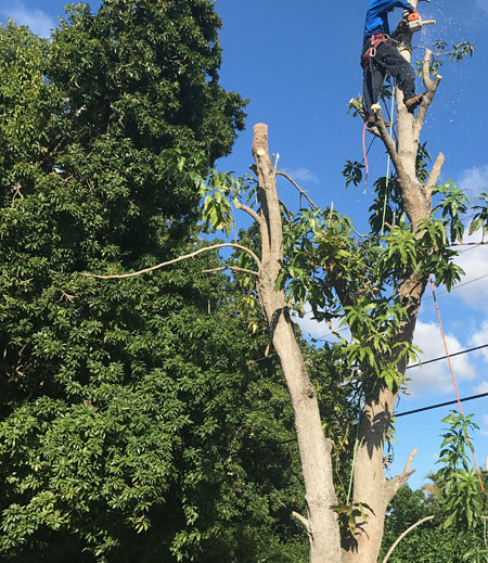 Best tree service company in Kendall