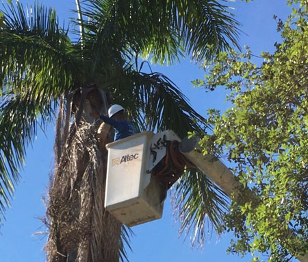 palm tree removal services