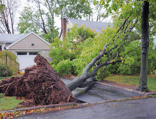 Storm Damaged My Tree… What to Do?