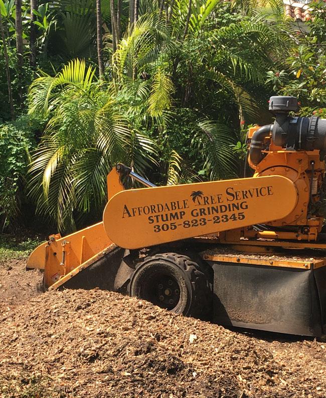Stump Grinding Fort Lauderdale Broward