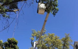 Tree Trimming Fort Lauderdale Broward