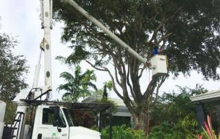 trimming trees Fort Lauderdale Broward