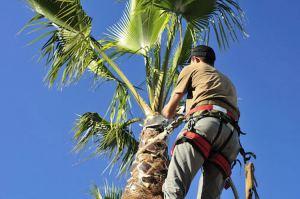 Best Tree Service Fort Lauderdale