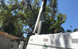 Tree Service Fort Lauderdale Broward County
