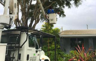 Tree Service Miami Dade