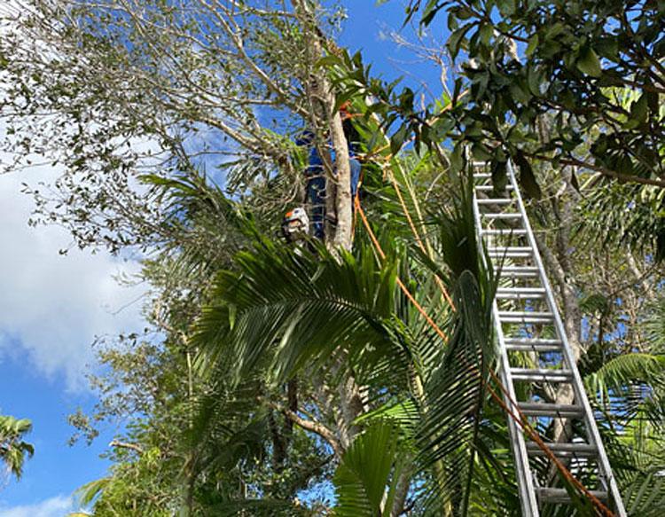 Tree Service Miami Shores