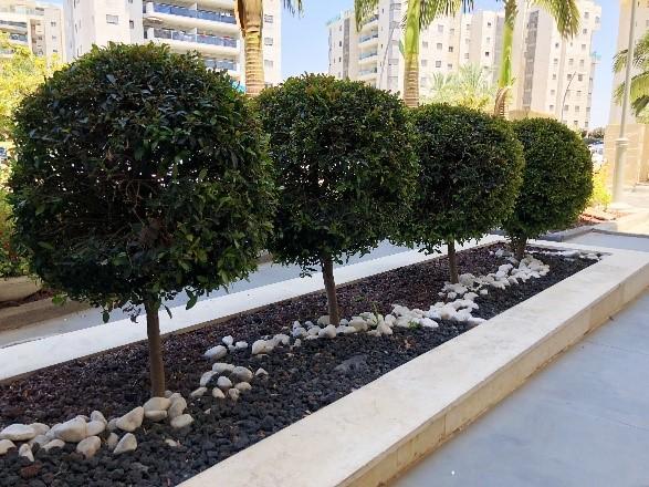 Pembroke Pines Tree Servicing