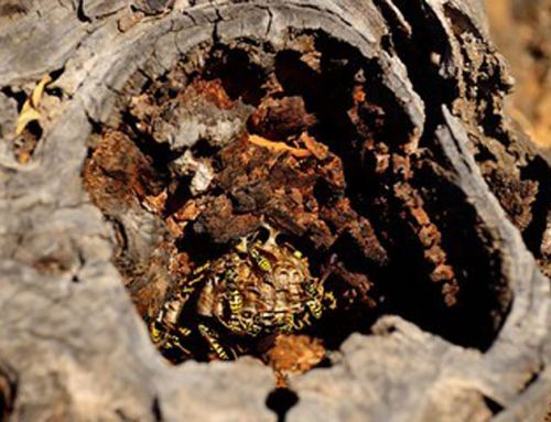 Tree Stump Grinding and Removal Due to Insect Nests