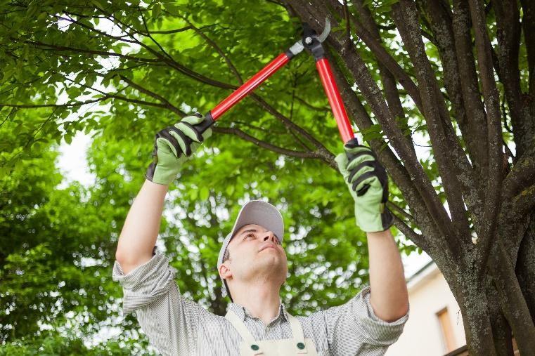 DIY tree maintenance