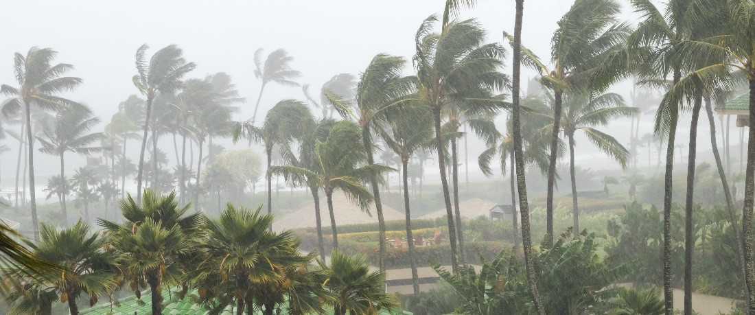 Trimming trees before hurricane
