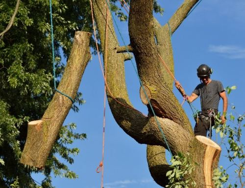 How to Remove Large Trees from Small Spaces