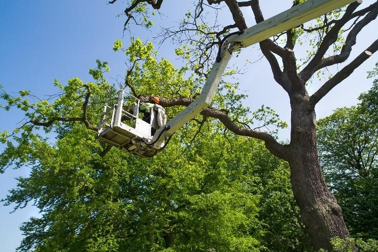 How to trim a tree without killing it