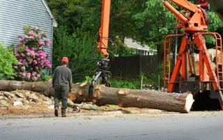 Tree Removal Service In Miami Shores