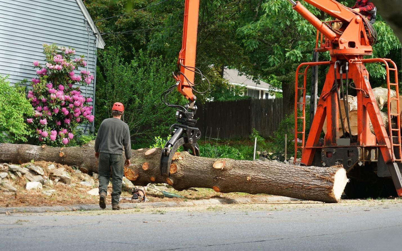 Tree Service In Miami Shores