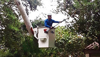 Tree Trimming Pruning Cooper City