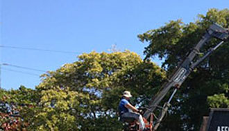 Tree Removal Cooper City