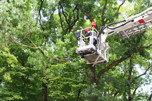 tree and palm removal