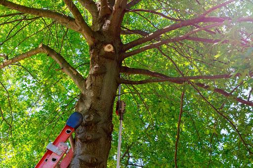 tree cutting risk assessment