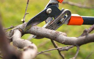 Tree Trimming Service Miami