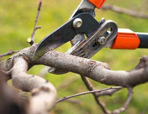 Tree Trimming Services in Miami