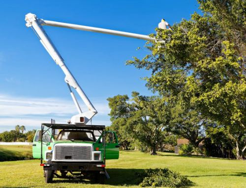 Cooper City Tree Trimming and Stump Grinding Services