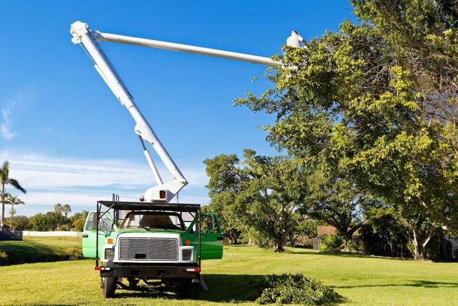 Cooper City Tree Trimming