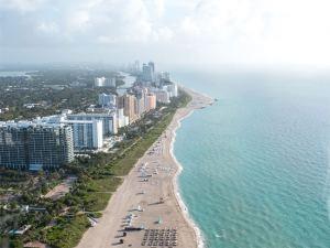 Miami Shores Tree Removal