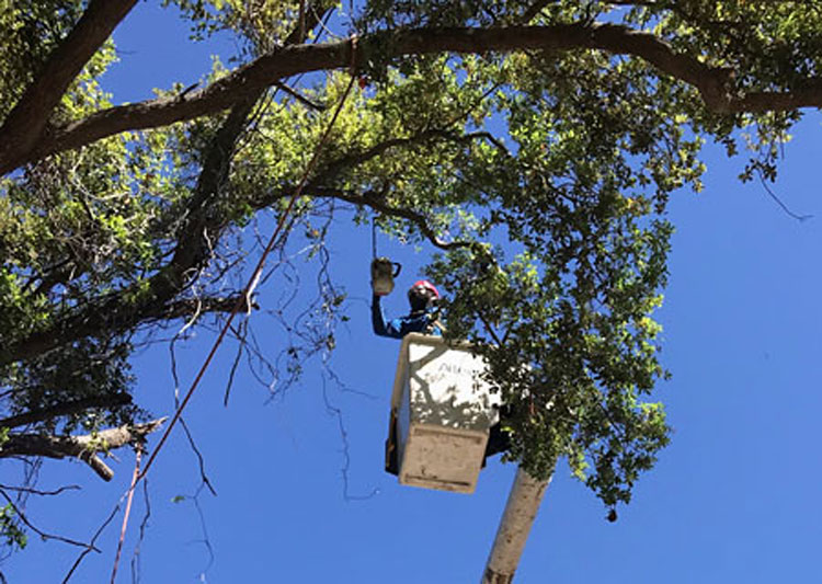 Tree Service in Fort Lauderdale