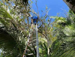 Tree Service in Pinecrest